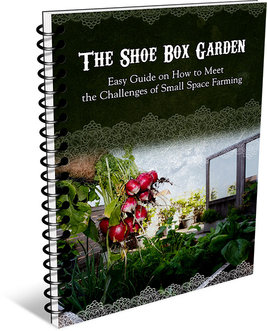How to Grow Your Shoebox Garden